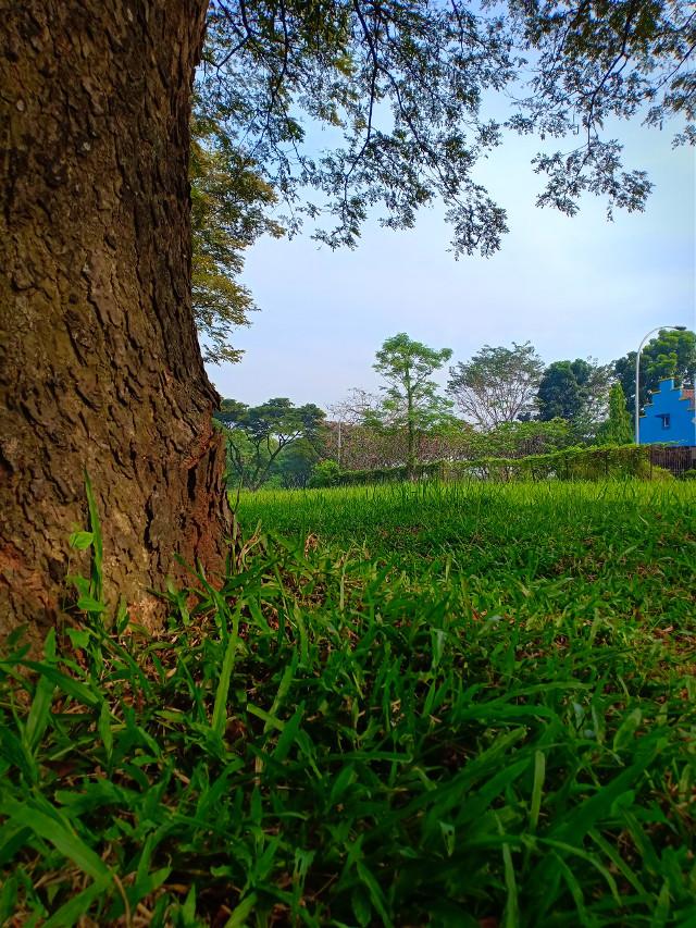 The original image of 👉 #myclick📷 #photography #nature#landscape #sky#grass#tree#mymorningwalk #myneighborhood  @picsart