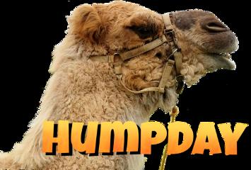 wednesday humpday humor camel daysoftheweek freetoedit