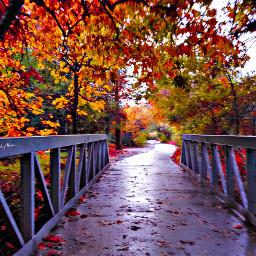 ghostfollowers dontfollowme nature natural fall freetoedit