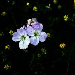 nature flower wildflower flowerpower adjusttool freetoedit