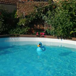 freetoedit myphotography mygarden pool water