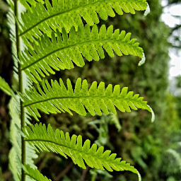 fern plants nature green greenleaves