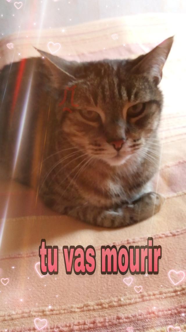 Mon chat le psycopate 😼😹