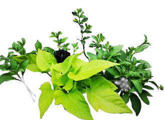 green leaves plants plant grow freetoedit scgreenleaves