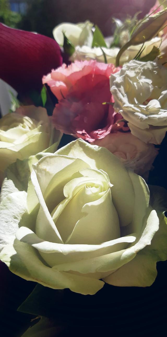 #freetoedit #flowers#whiterose