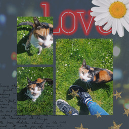 freetoedit collage cat daisy love