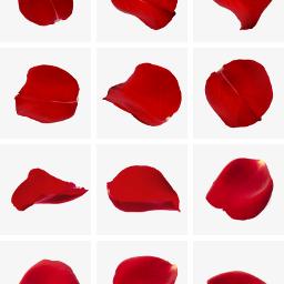 freetoedit petali rosa cuorelucymy lucymy