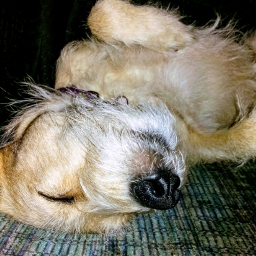 freetoedit mydog nova female happydog pcpetsofpicsart