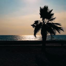 freetoedit pcbeachtime beach palmtree homeland