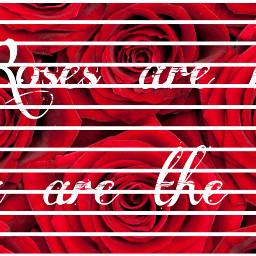 rose roses red redrose redroses freetoedit