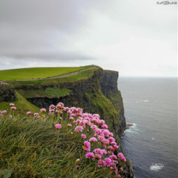 cliffsofmoher cliffs sea water flower