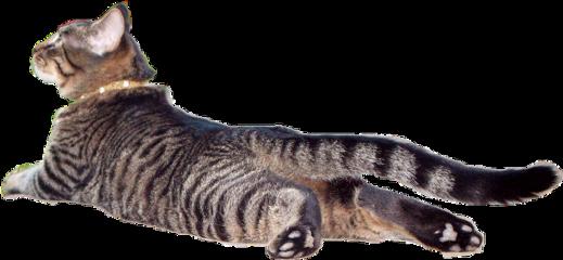 hunter cat flat weird pancake freetoedit