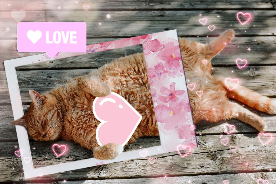 #cat #heart #lovecats #