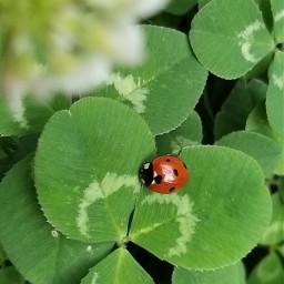 ladybug summer2019 green shymkent