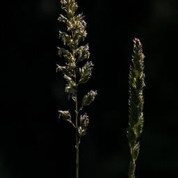 freetoedit greengrass dark contrast naturephotography