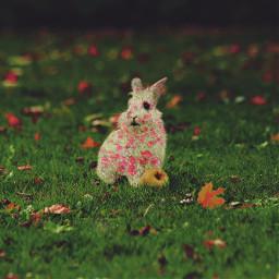 freetoedit rabbit flowers sweet nature