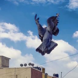freetoedit pegion fly sky oneplus7pro
