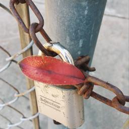 locks colorful photography fence gates pclocksandkeys