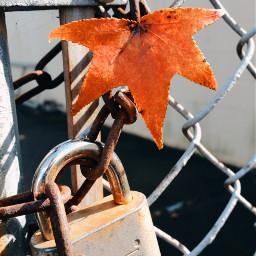 locks fence fallcolors leaves orange pclocksandkeys