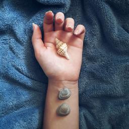 freetoedit hand shells seashells photography