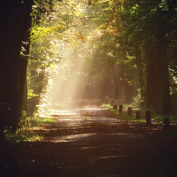 trees sunbeams sunnyeffect myphoto myedit freetoedit