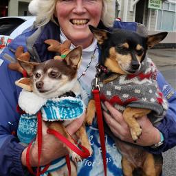 dogs chihuahua miniaturepinscher christmas reindeer pcfunwithmydog