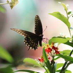 freetoedit remix butterfly butterflylove vividcolor