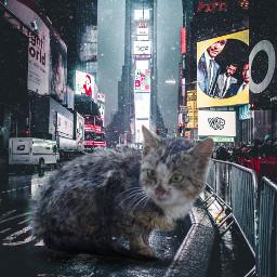 freetoedit cat wet cold kitten