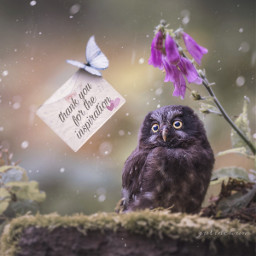 freetoedit owl beatiful nature envelope