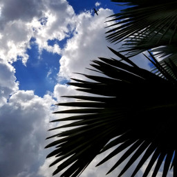 mypic pcpalmtrees palmtrees