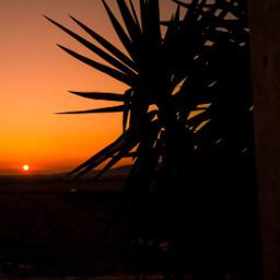 sunrise photography myphoto silhouette freetoedit pcpalmtrees