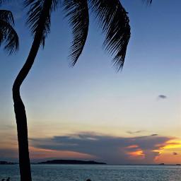 freetoedit picsart madewithpicsart palmtree palmbeach pcpalmtrees
