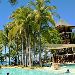 pcpalmtrees palmtrees philippines freetoedit remixme