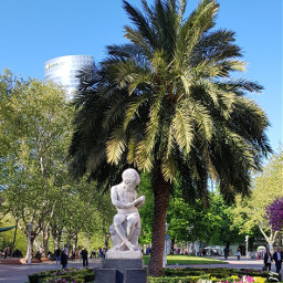 freetoedit pcpalmtrees palmtrees