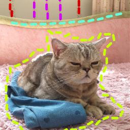 кот кошка котэ херсон украина freetoedit