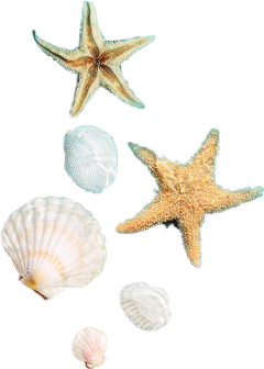 freetoedit shellfish seashell stars summer scallthingssummer ftesticker ftestickers summersticker