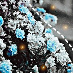 flowers gardenflower freetoedit