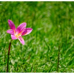 freetoedit photography myphotography all_shots flowers pcflowers