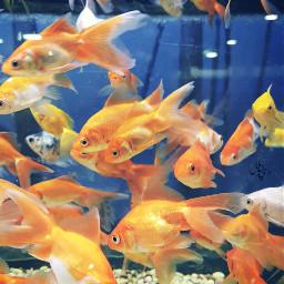 freetoedit fish color