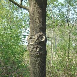 naturephotography nature trees treeart treesilhouette