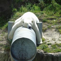 polarbear sleeping lazymood mondaymood mondaymorning
