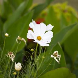 freetoedit flowers nature white green