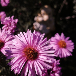 flowers flowerpower pinkflowers beautifulnature nature