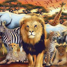 freetoedit selva animais aventura safari irckingofthejungle