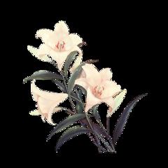 freetoedit flower vintage white flowers