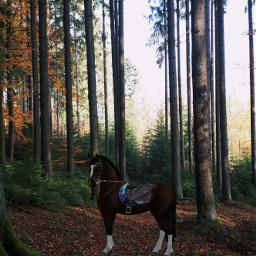 newhorse buy beauty horse freetoedit