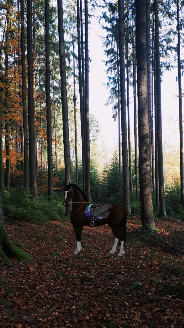 #newhorse #buy #beauty #horse