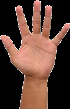 hand real realhand raisinghand highfive freetoedit