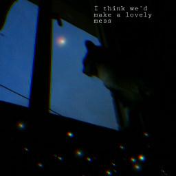 cat photo night window phrasestumblr