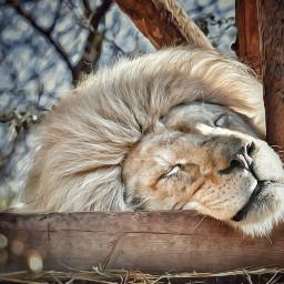 lion petsandanimals e-go feline e